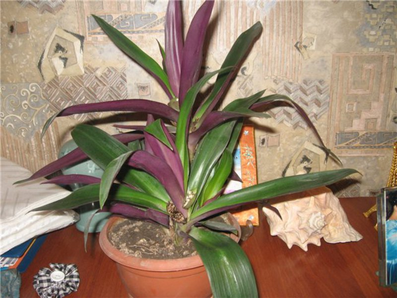 Домашние не цветущие растения фото и названия