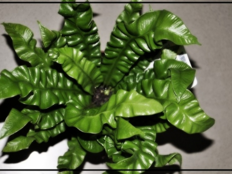 Горшочные цветы лиственные
