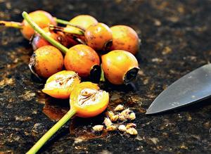 Розы семенами из Китая как выращивать в домашних условиях, особенности посадки и ухода