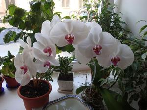 Орхидея уход в домашних условиях фото после покупки