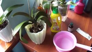 уход за орхидеями дендробиум микс в домашних условиях