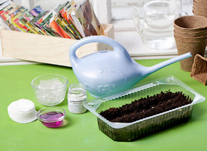 Петуния выращивание из семян в домашних условиях