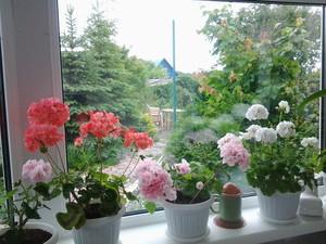 Преимущества комнатных цветов, цветущих круглый год