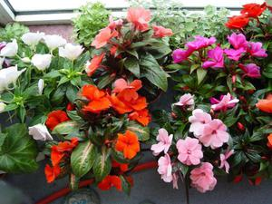 Комнатные цветы и садовые цветы