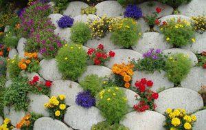 Цветы на даче цветущие все лето
