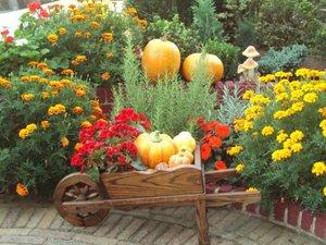 Плюсы многолетних цветов