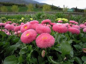 Какие цветы посадить на огороде