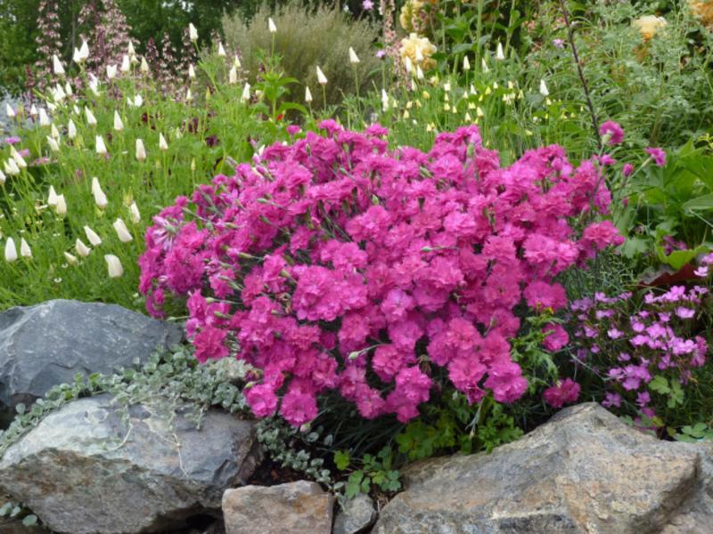Многолетние цветы для участка