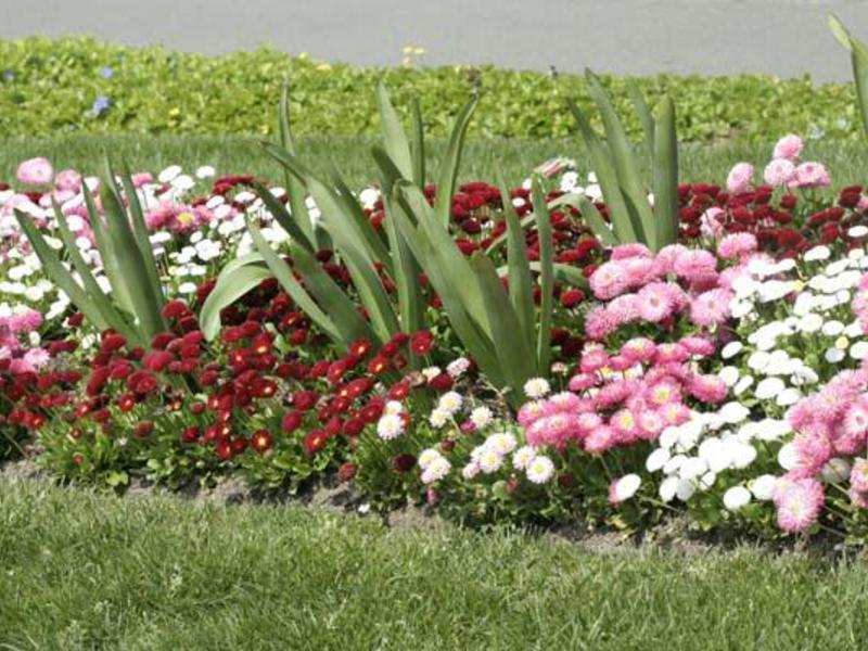 Посадка многолетних цветов