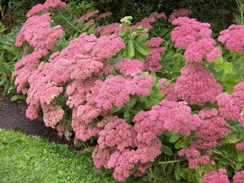 Какие сорта цветов цветут все лето