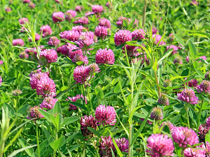 Желтые полевые и луговые цветы