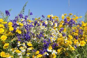 Список полевых цветов