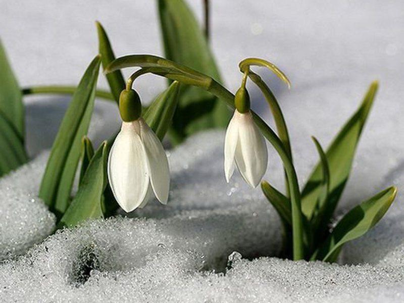 Распечатать цветы своими руками фото 875