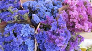 Цветы для сухоцветов фото