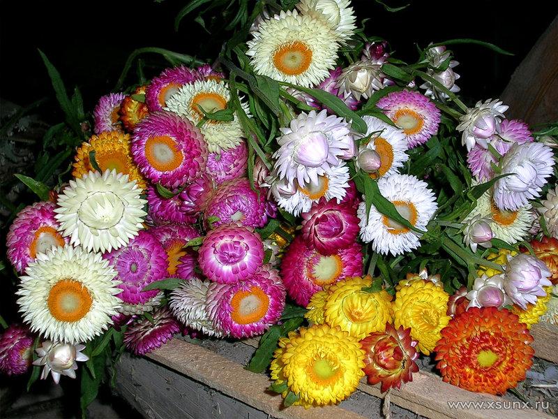 Цветы сухостои купить gardenia доставка цветов