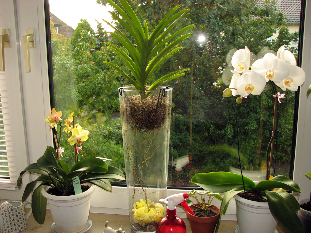 Как правильно поливать орхидею в домашних условиях: особенности полива и способы, какой должна быть вода