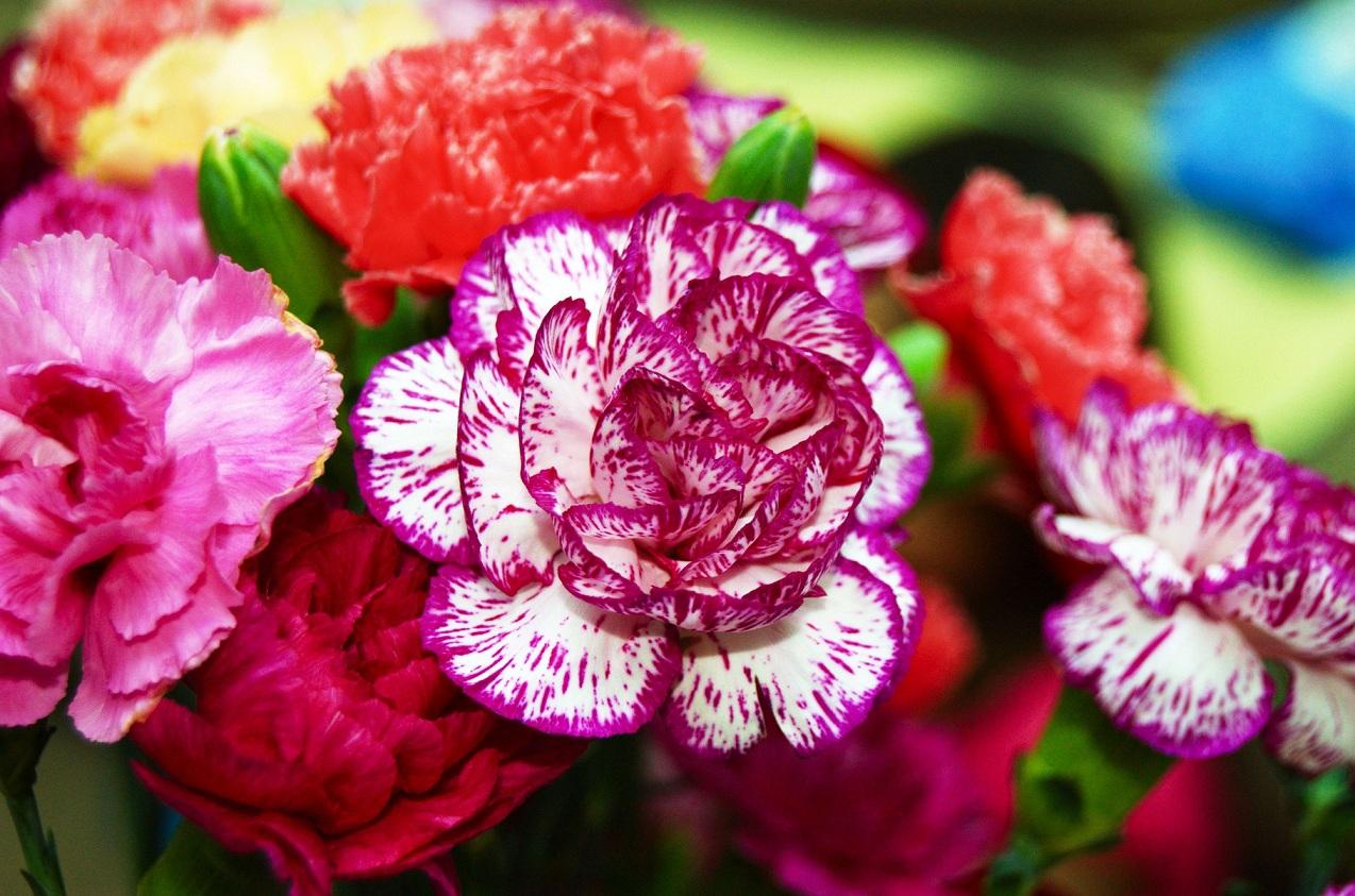 Фото кустовых многолетних цветов