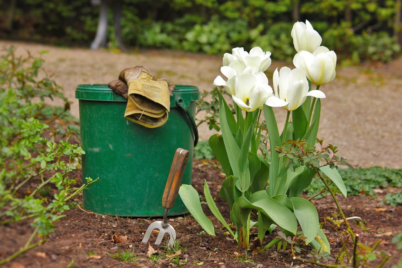 Посадка тюльпанов весной в грунт: выращивание и уход