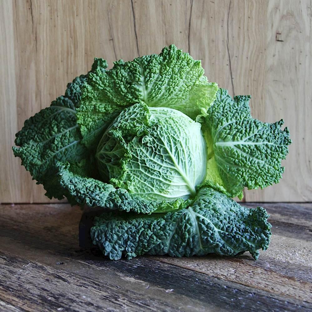 Савойская капуста: посадка, выращивание, лучшие сорта