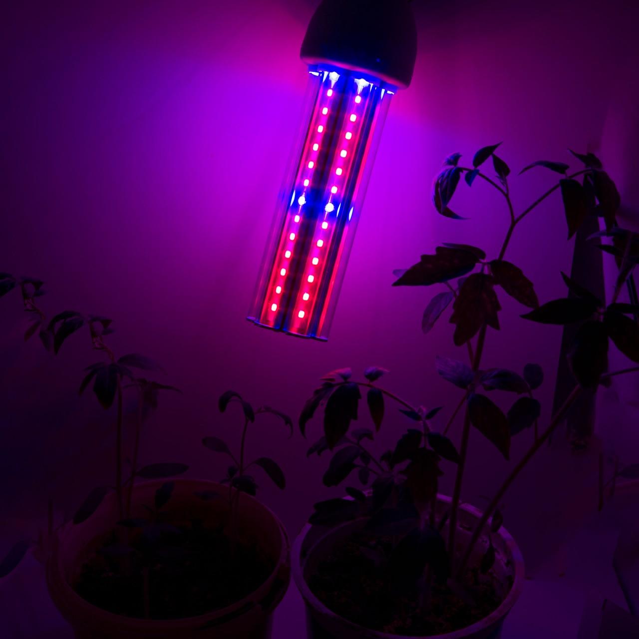 Особенности применения лампы для освещения рассады «Фитосвет»
