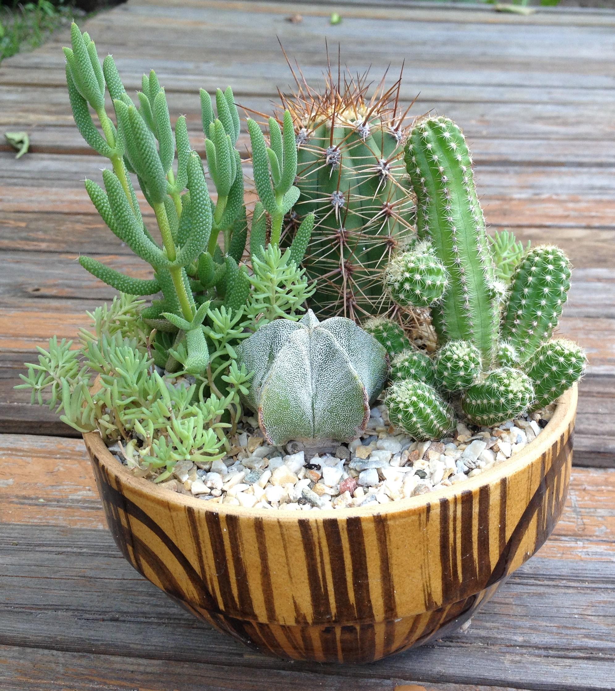 Названия кактусов, виды и уход в домашних условиях
