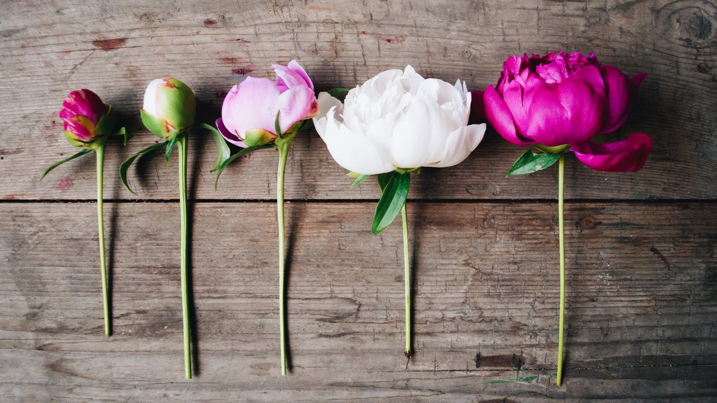 Великолепные пионы: виды, сорта и фото галерея красивых цветов