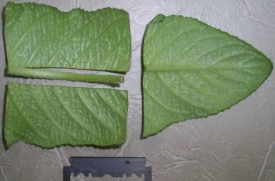 Деление листовой пластины на части