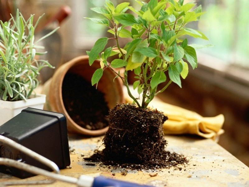 6 материалов для дренажа цветов, которые помогут убрать из горшков лишнюю влагу