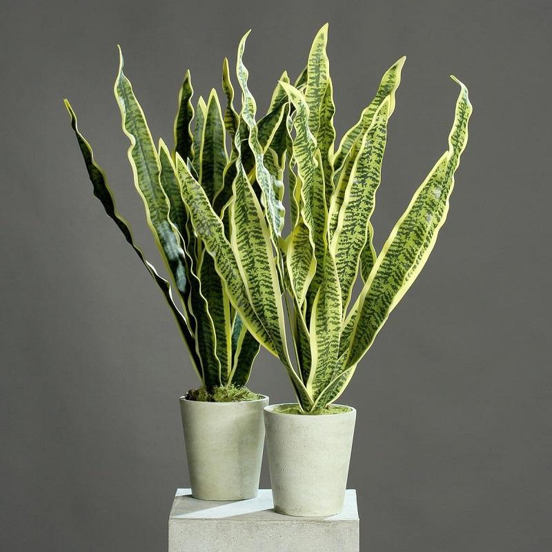 шар пизде комнатные растения щучий хвост фото все творческая