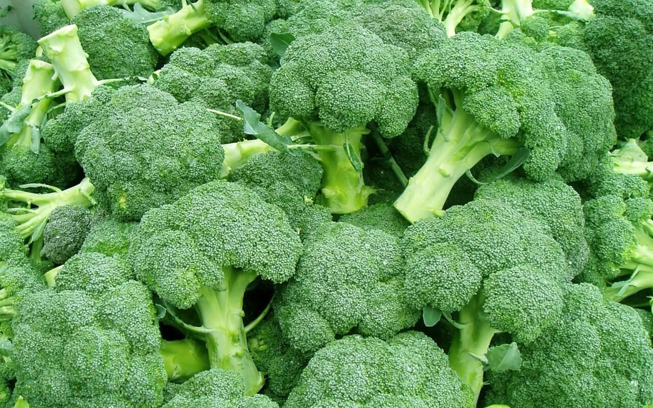 Выращивание капусты брокколи: сорта, фото