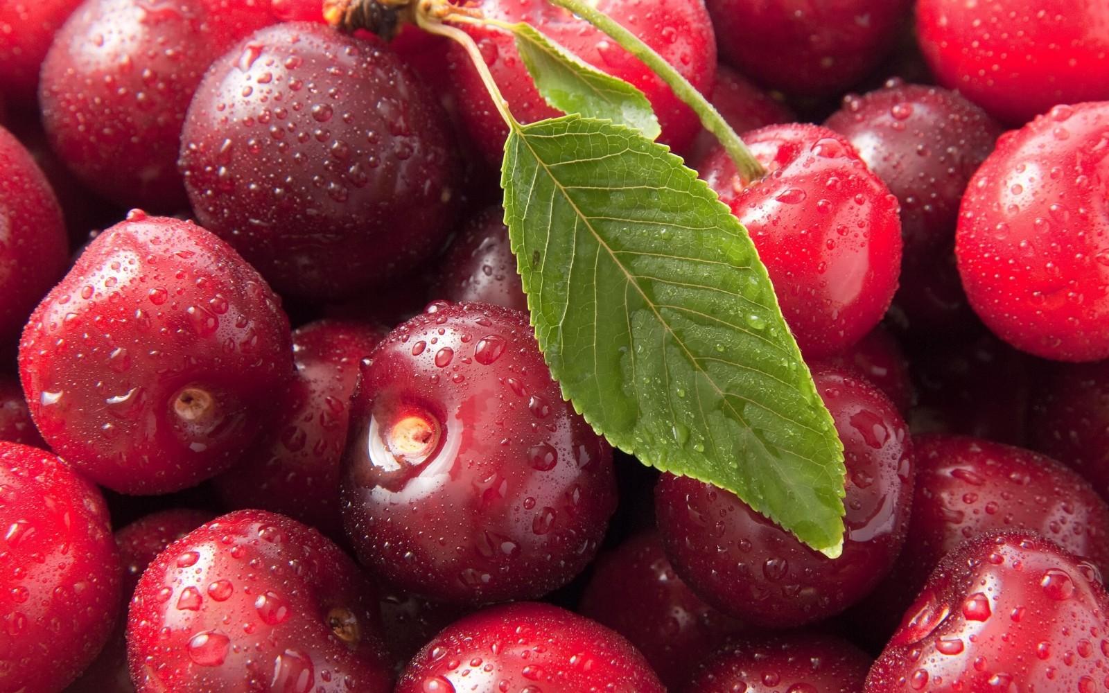 Сорта и виды вишни: их особенности для разных регионов России и Украины