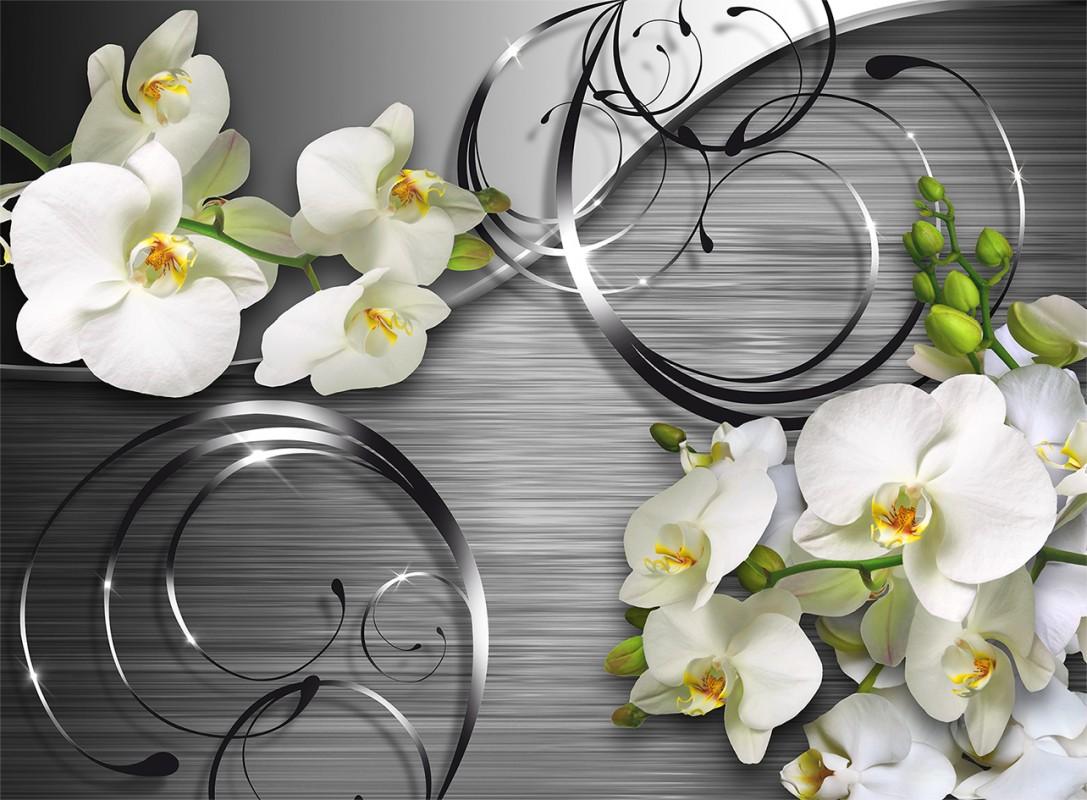 Белая орхидея: фото и описание
