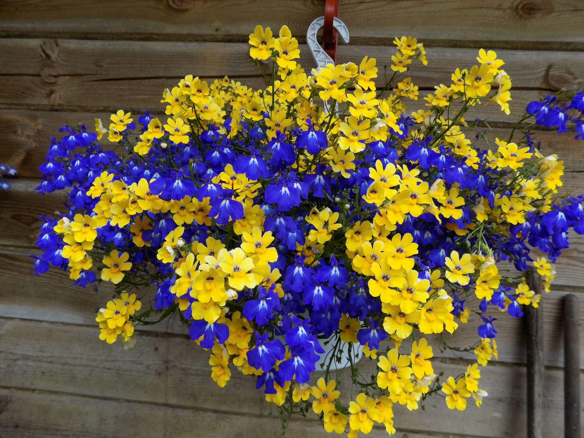 Ампельные цветы для размещения в кашпо и их названия