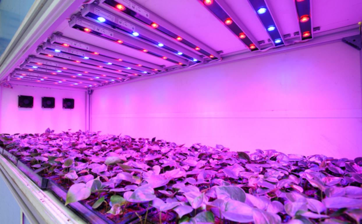 Фитолампы для растений: преимущества, отзывы и характеристики