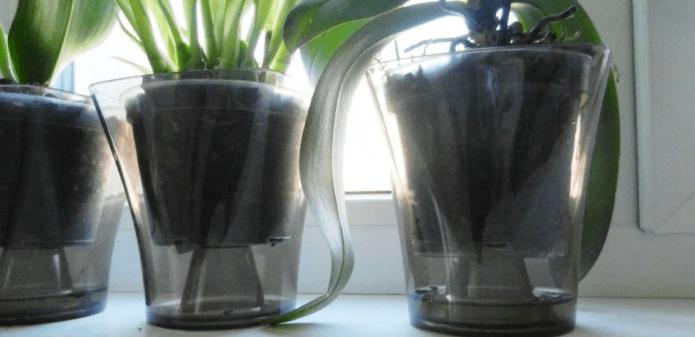 Горшечные цветы в прозрачных емкостях