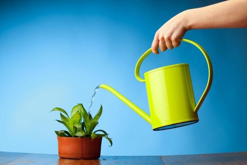 Чем полить комнатное растение, чтобы оно обильно цвело