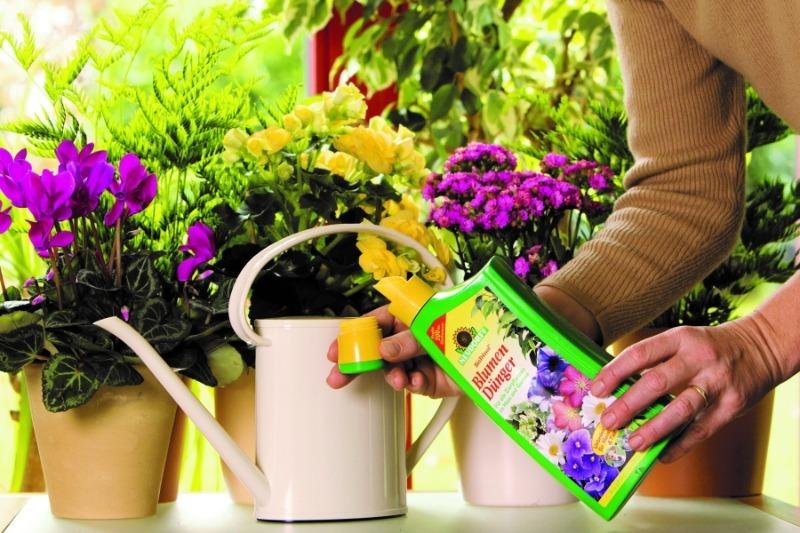 Чем подкормить растения, чтобы не отравлять их химией