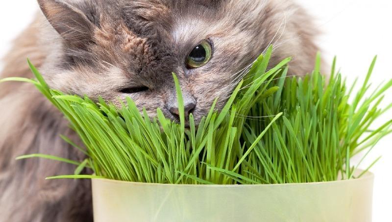 Как защитить домашние растения от «нападений» домашних питомцев