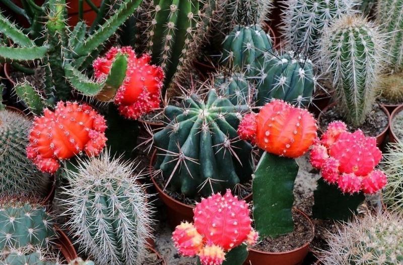 4 лучшие подкормки для кактусов, чтобы не болели