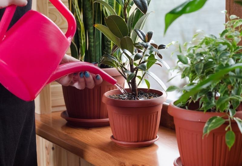 Чтобы растения не болели: 3 важных момента по поливу комнатных растений