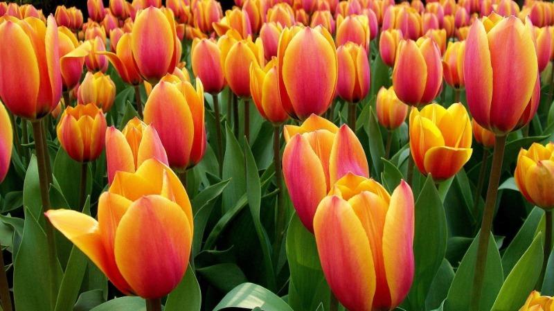 5 цветов, которые можно вырастить дома в стакане
