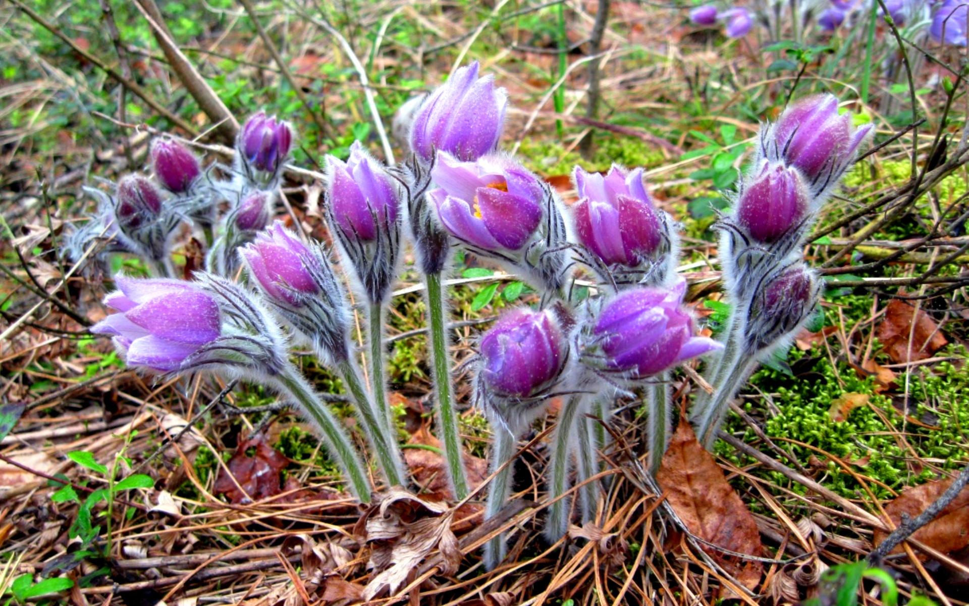 Первые весенние цветы: фото, названия и описание первоцветов