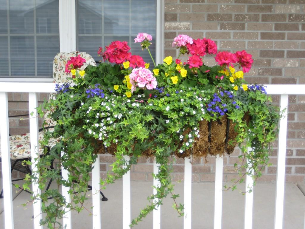 Какие цветы посадить на балконе на солнечной стороне, их названия