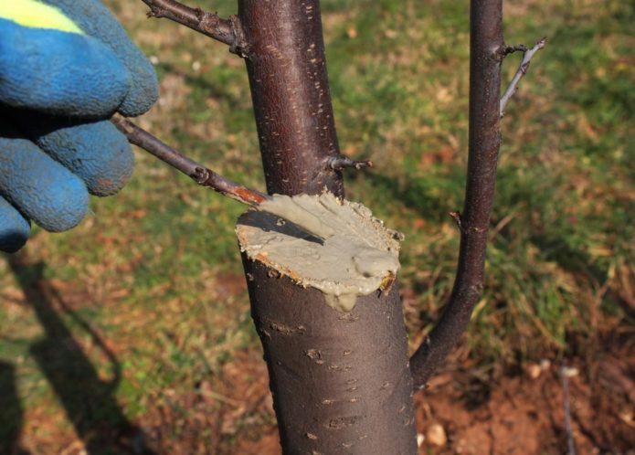 Обработка среза на дереве