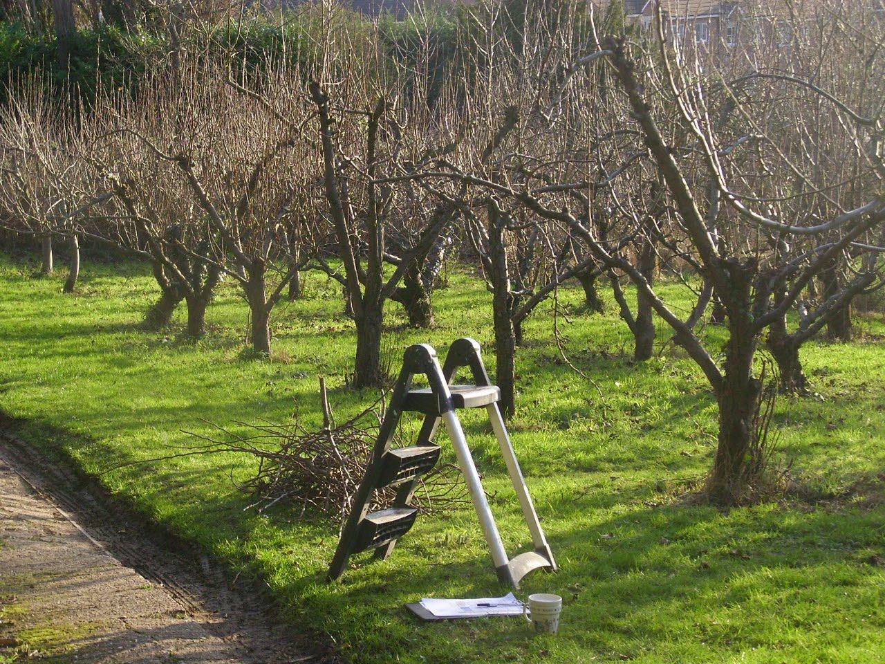 Как правильно весной провести обрезку плодовых деревьев