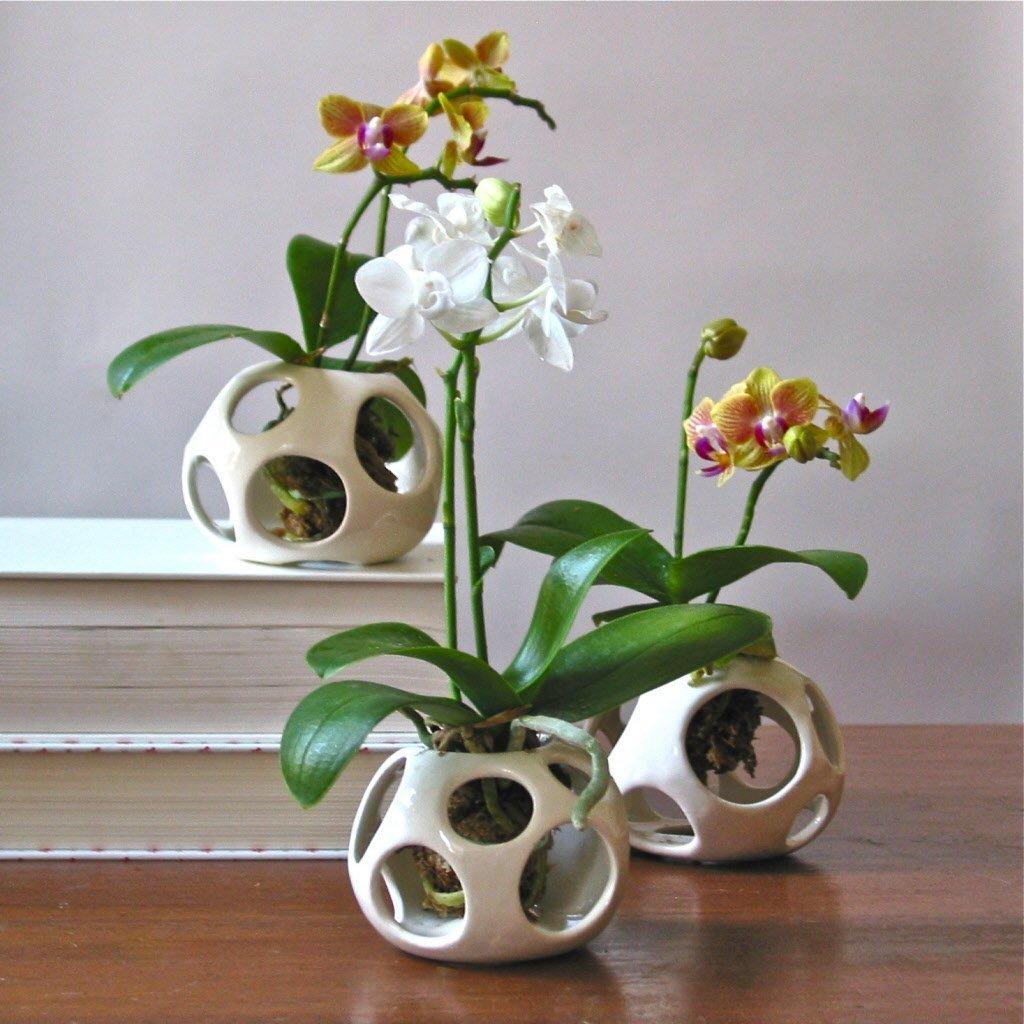 Пересадки орхидеи фаленопсис в домашних условиях: советы, видео
