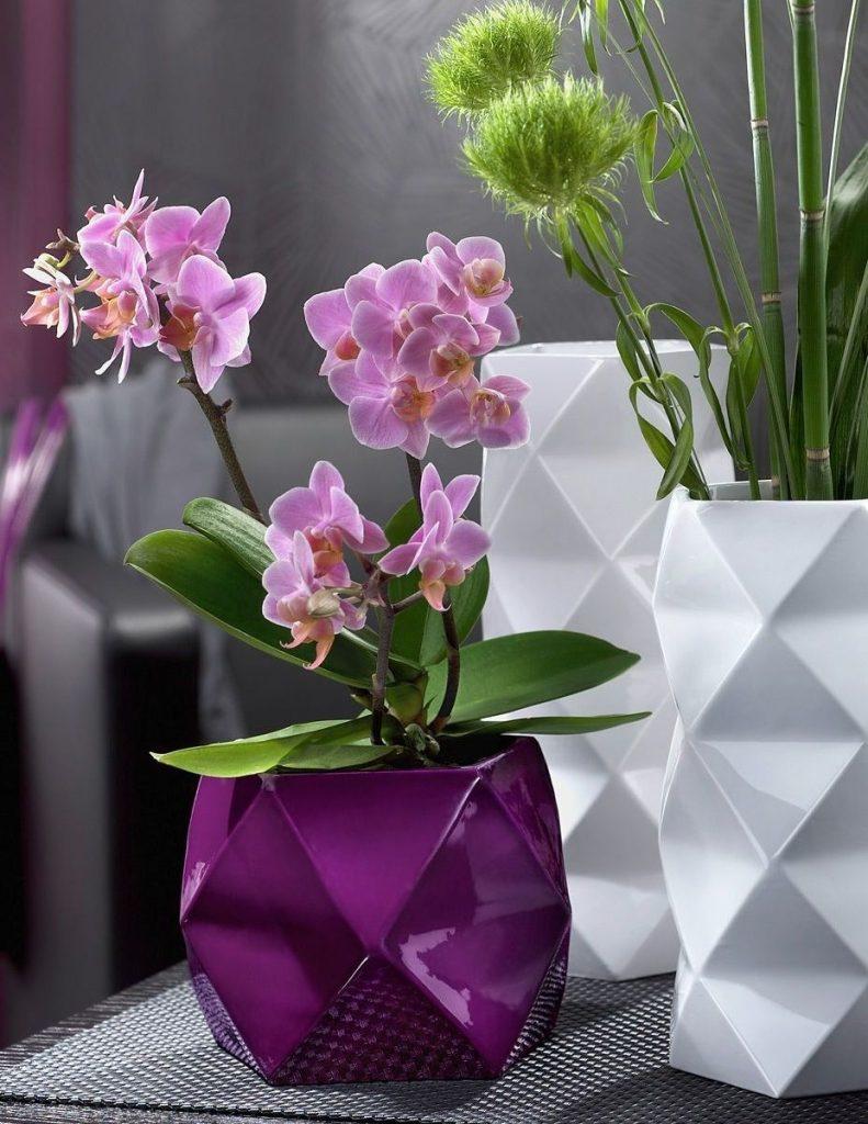 Как ухаживать за орхидеями дома: особенности ухода, фото