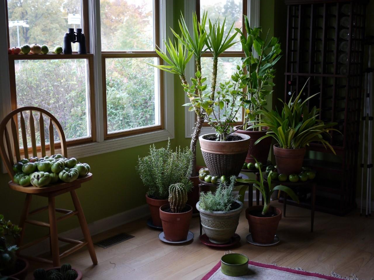 Комнатные растения, способные приносить в дом несчастья