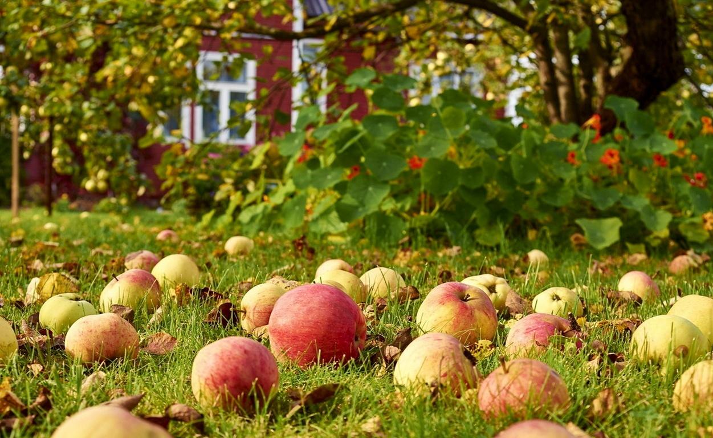 Удобрения для яблони, их виды, значение и правила подкормок