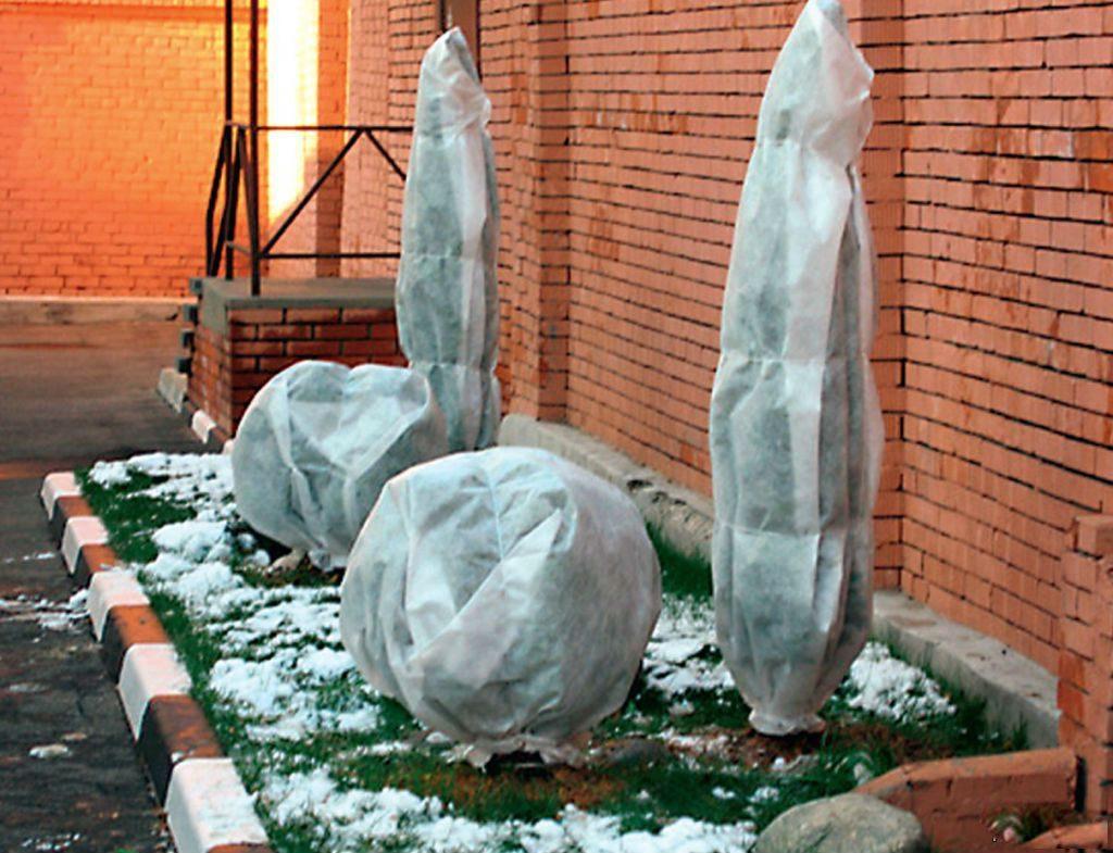 Подготовка дёрена пестролистного к зиме